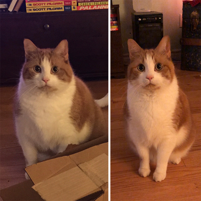 big chonk one year of diet