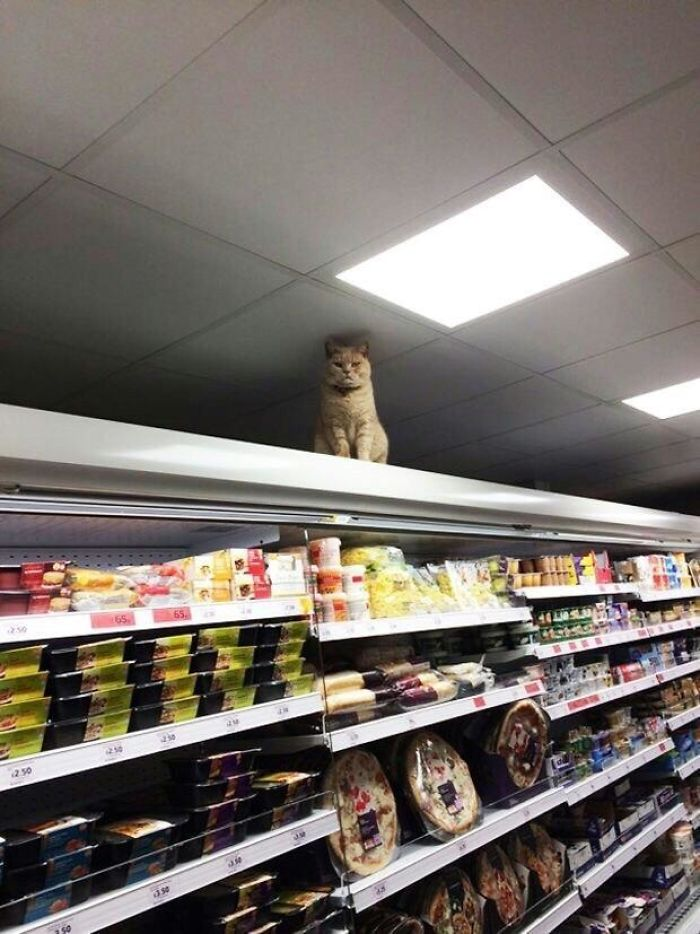 bodega kitty offers store security