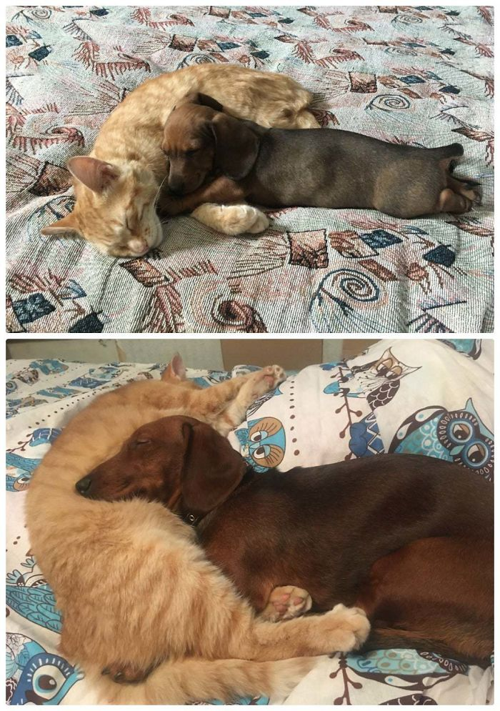 cat and dog love to sleep together