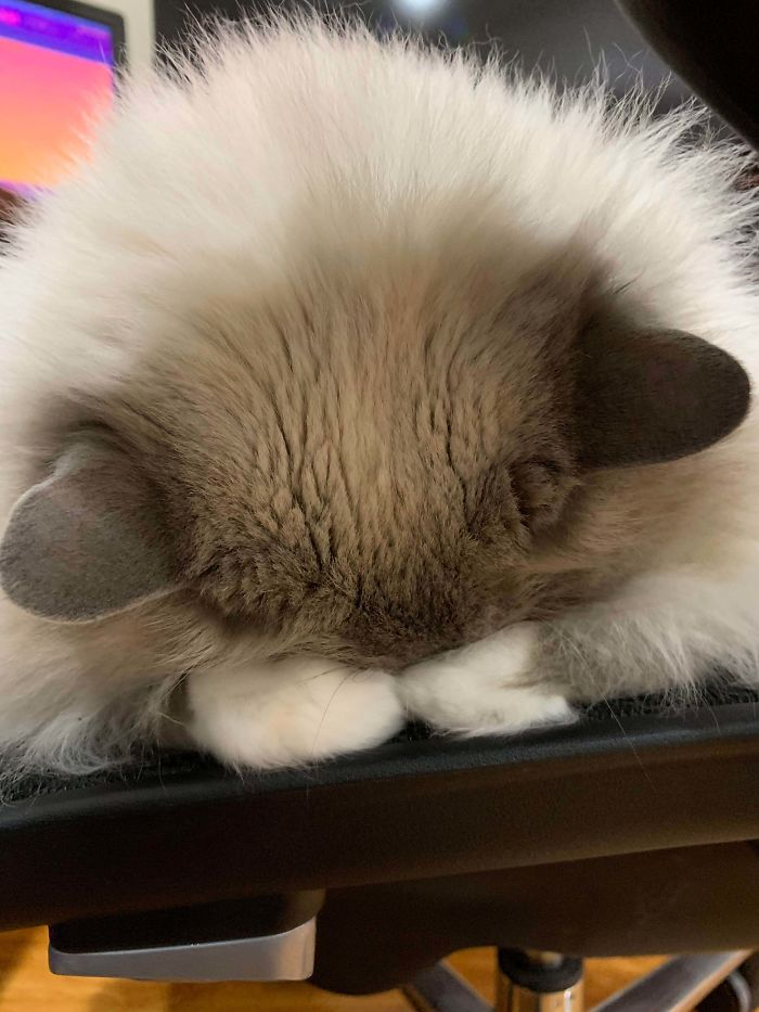 cat unusual sleeping position