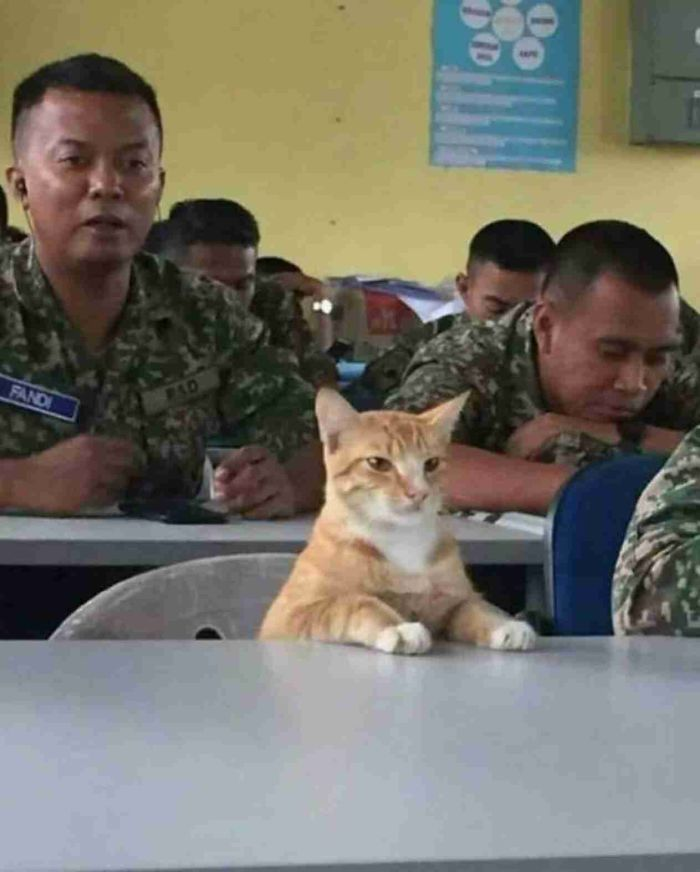 colonel mittens at your service