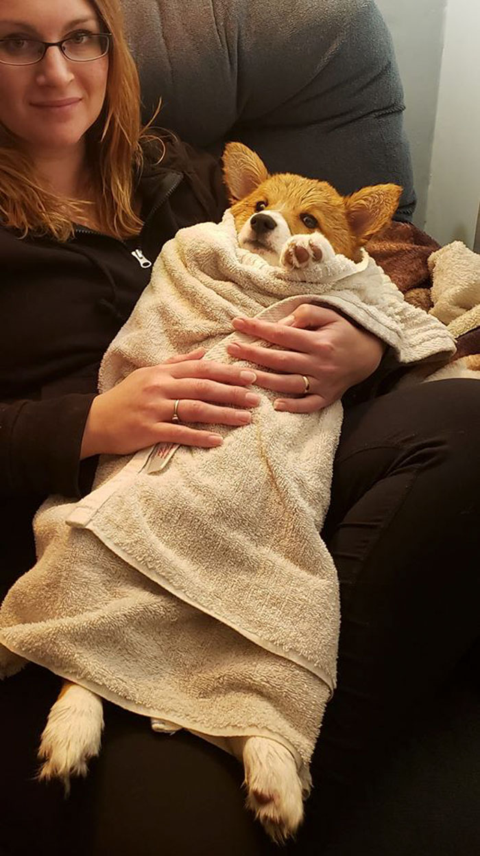 cute dog not happy to have a bath