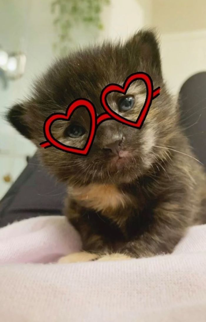 cute kitten filter heart glasses