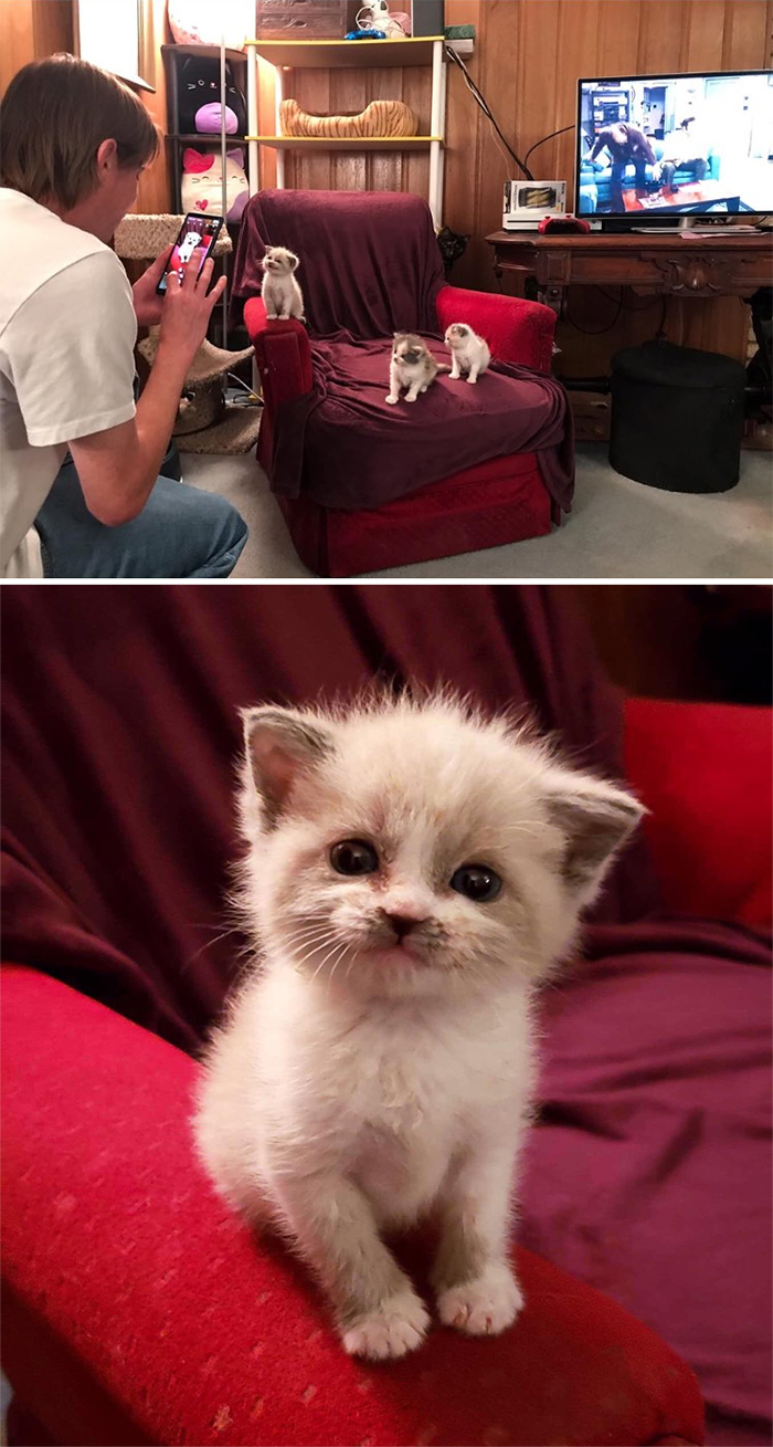 cute kitten smiling for the camera
