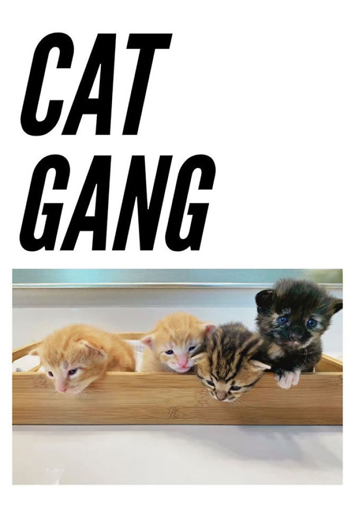cute litters cat gang