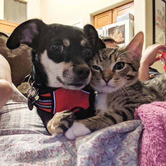 dog and cat sweet photo
