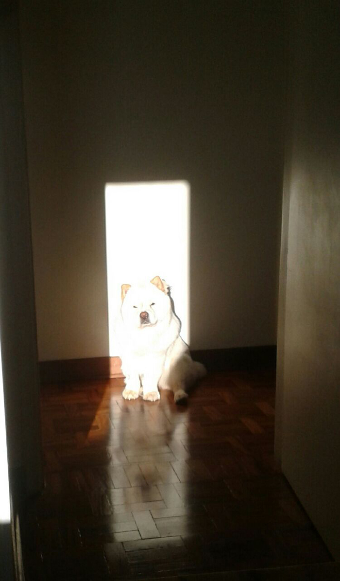 dog enjoying the ray of sunlight indoors