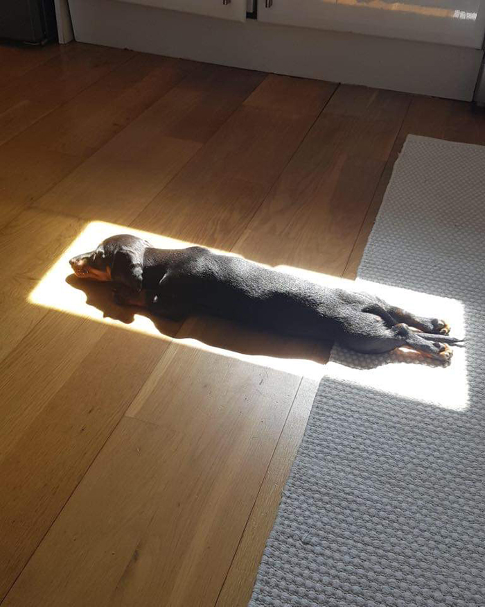 dog fits in sunlight