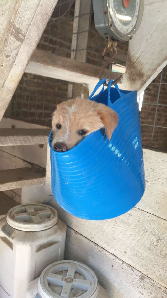 dog in a hanging bag getting weighted