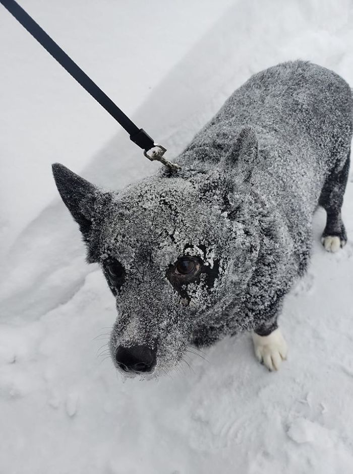 dog unhappy with the blowing snow