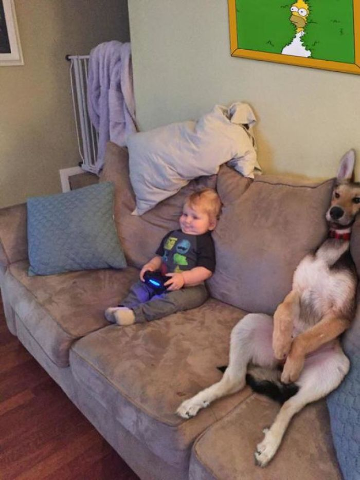 doggo copying homer meme