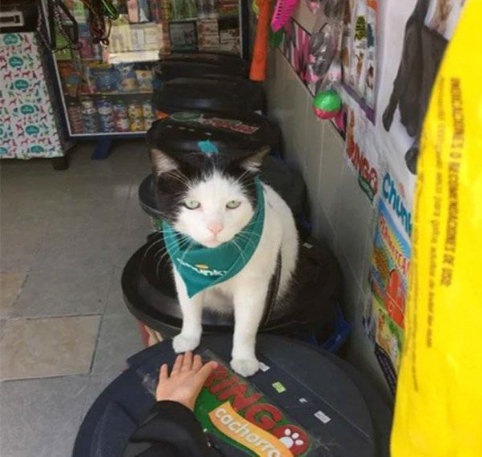feline manager local pet store