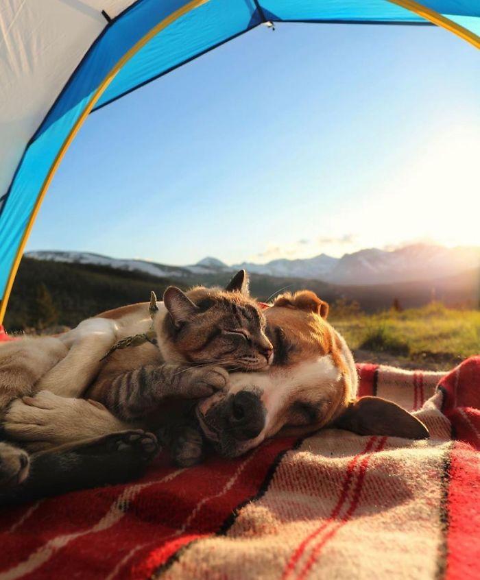 friendly kitty sleeps with dog
