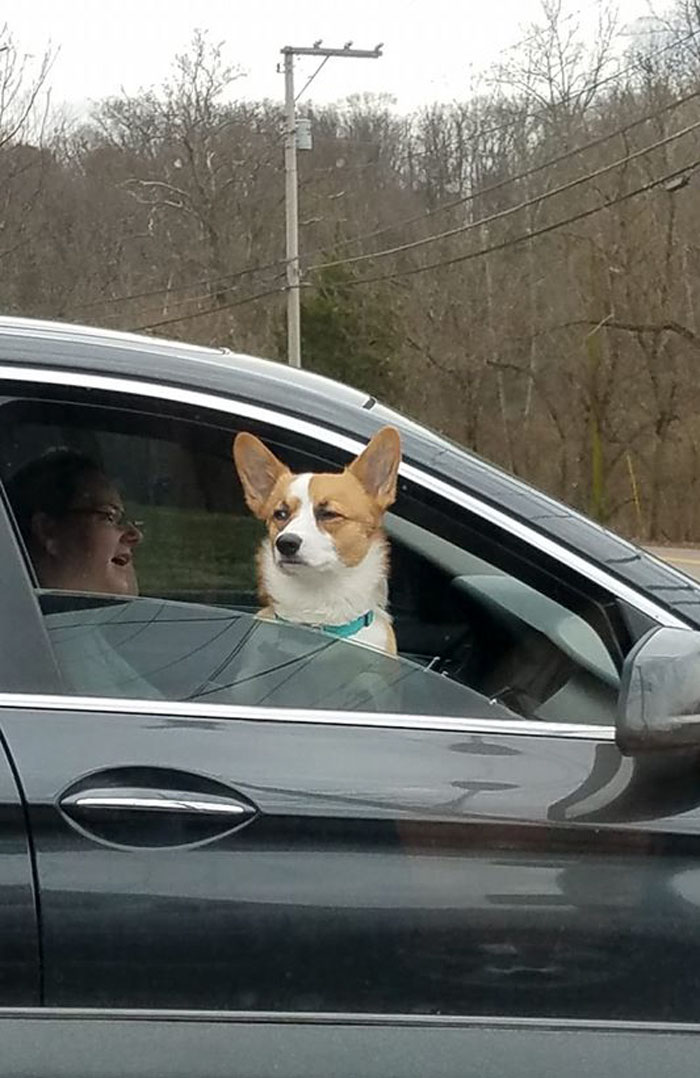 funny dog look of disapproval
