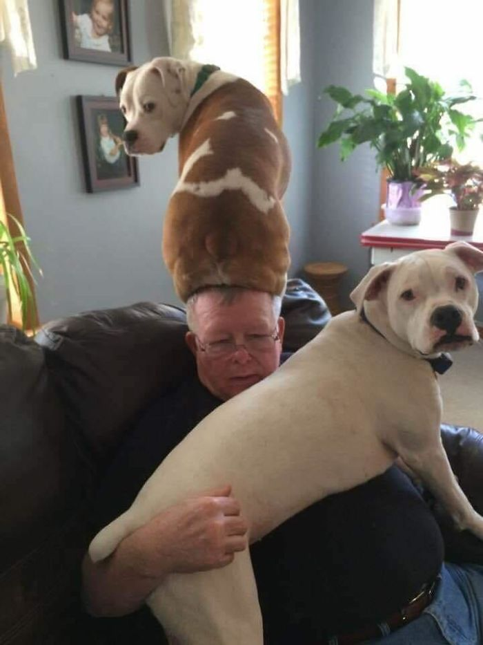 funny dog posts doggo hat