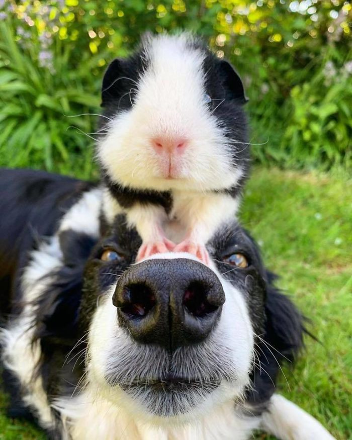 funny dog posts double boop