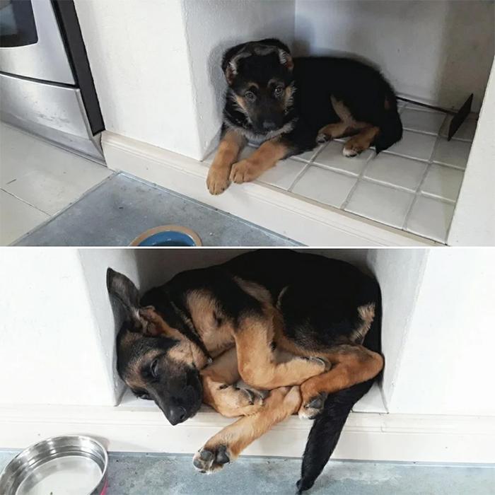 funny dog posts grown up still fits