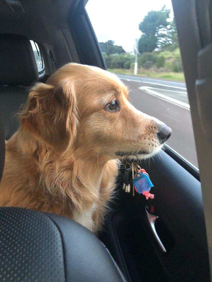 funny dog posts keys