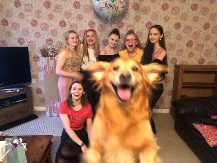 funny dog posts photobomber