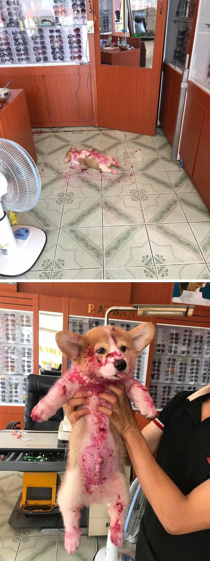 funny dog posts strawberry jam crime