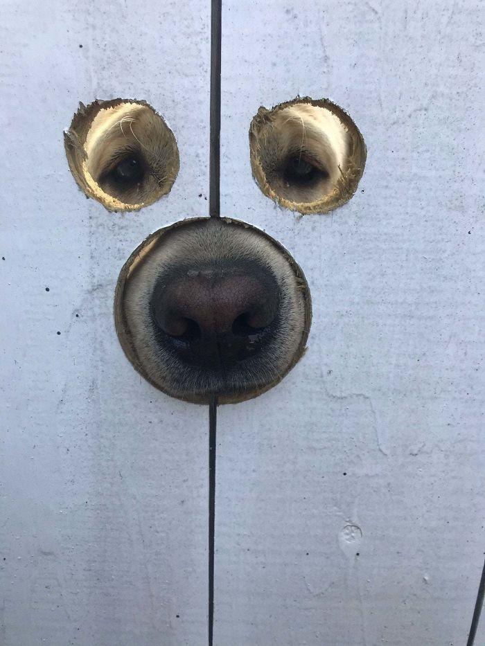 gate holes for doggo