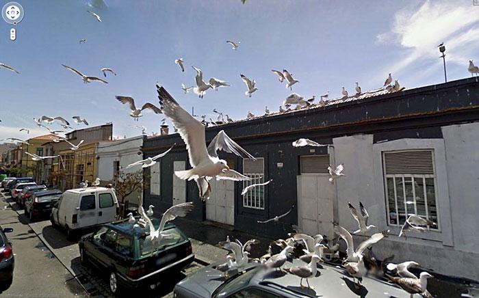 google street view bird invasion
