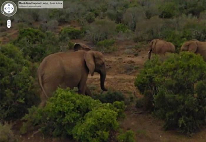 google street view elephants