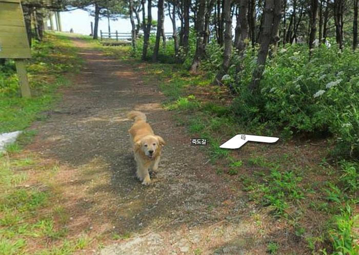 google street view follower dog