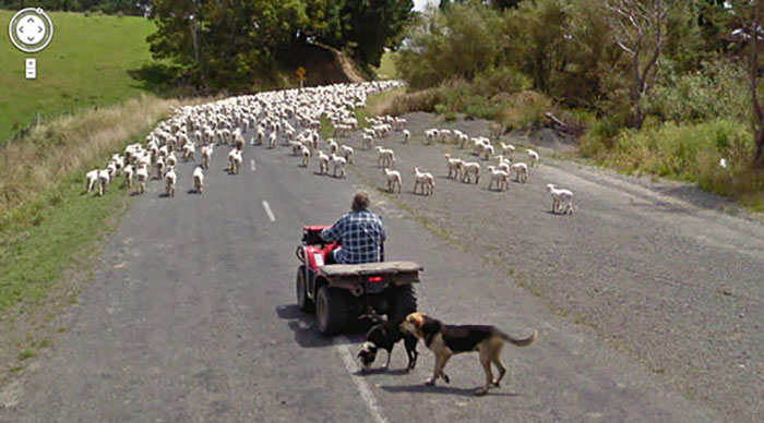 google street view herd of sheep