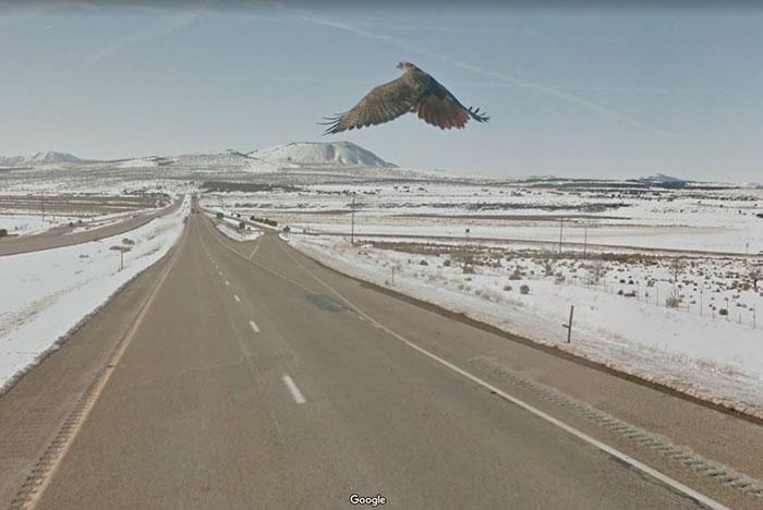 google street view high flying bird