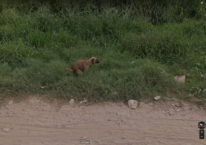 google street view popping dog