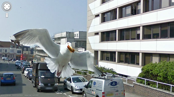 google street view seagull stealing food