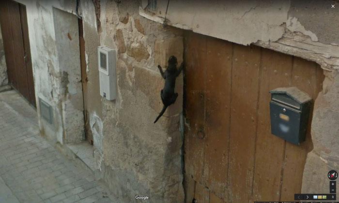 google street view spider cat