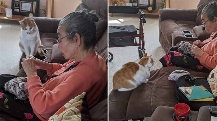 grandma sews back kitty favorite toy