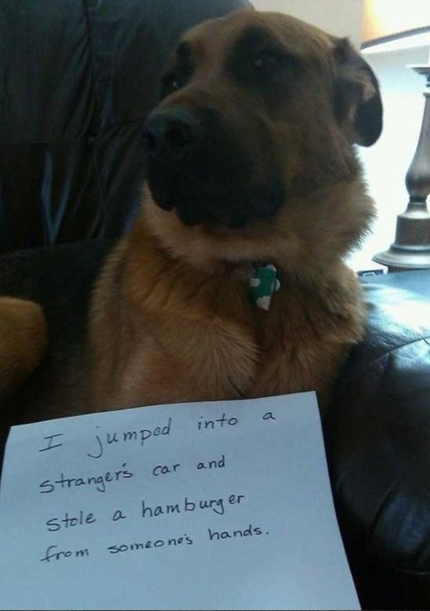 hamburger thief