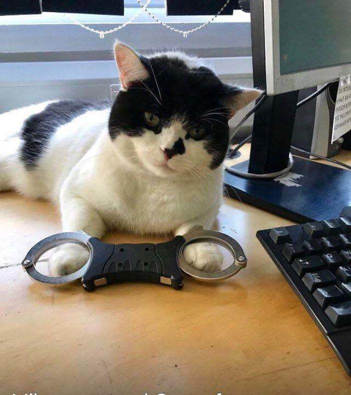 hardworking feline police station