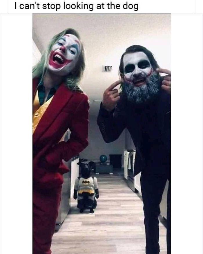 hilarious doggo in batman costume