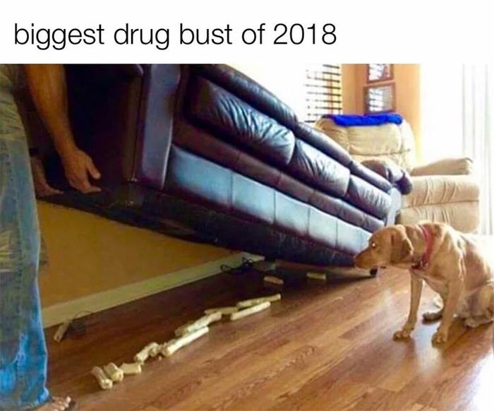 hilarious pet biggest drug bust of 2018