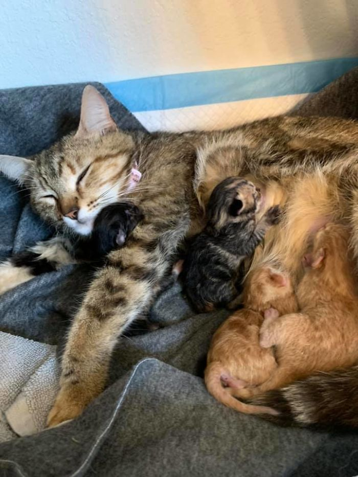 kevin the kitty gives birth to four kittens
