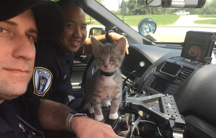 kitty cop pawfficer donut