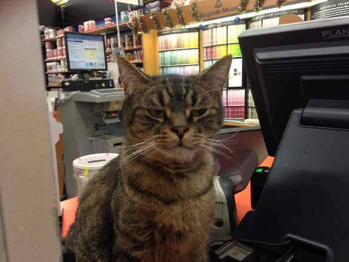 kitty guard hardware store