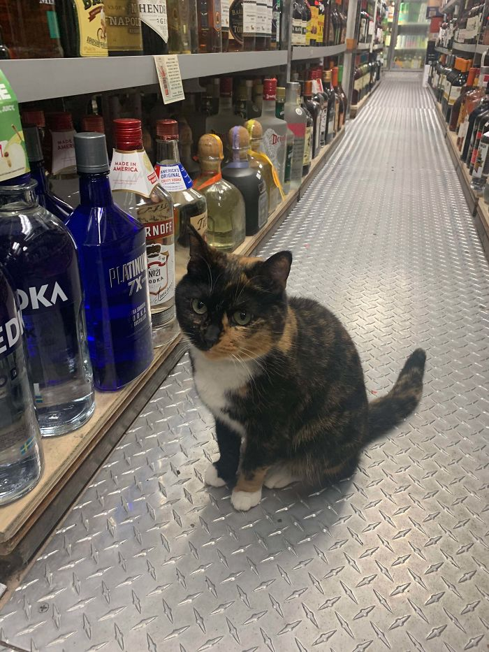 kitty in liquor store employee of the month