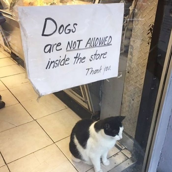 kitty security guard store
