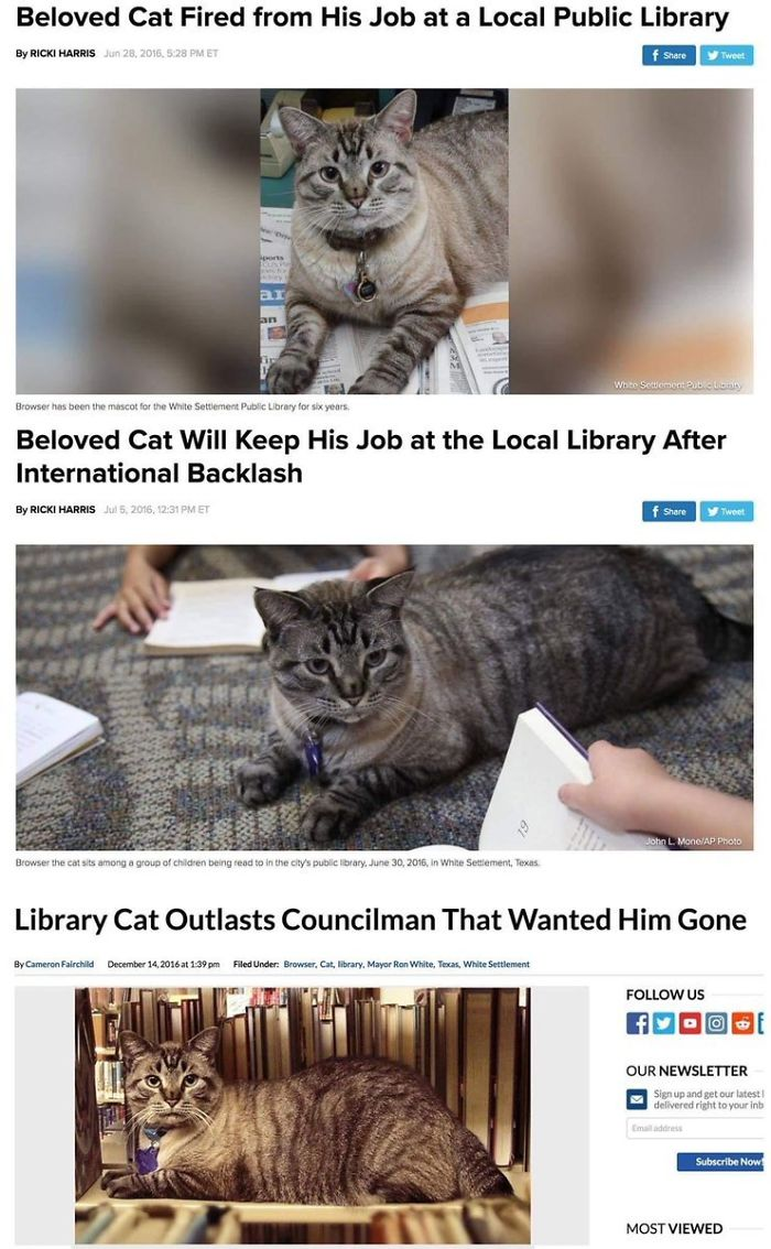library kitty keeps his job