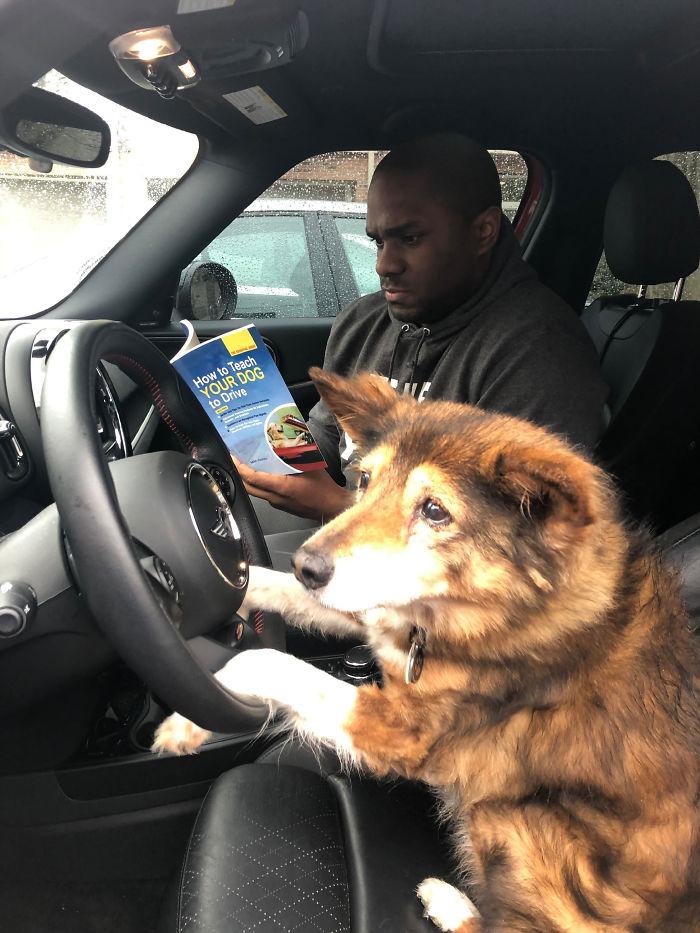 man teaches doggy how to drive