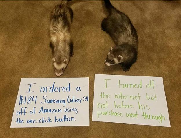 naughty ferret orders a phone on amazon
