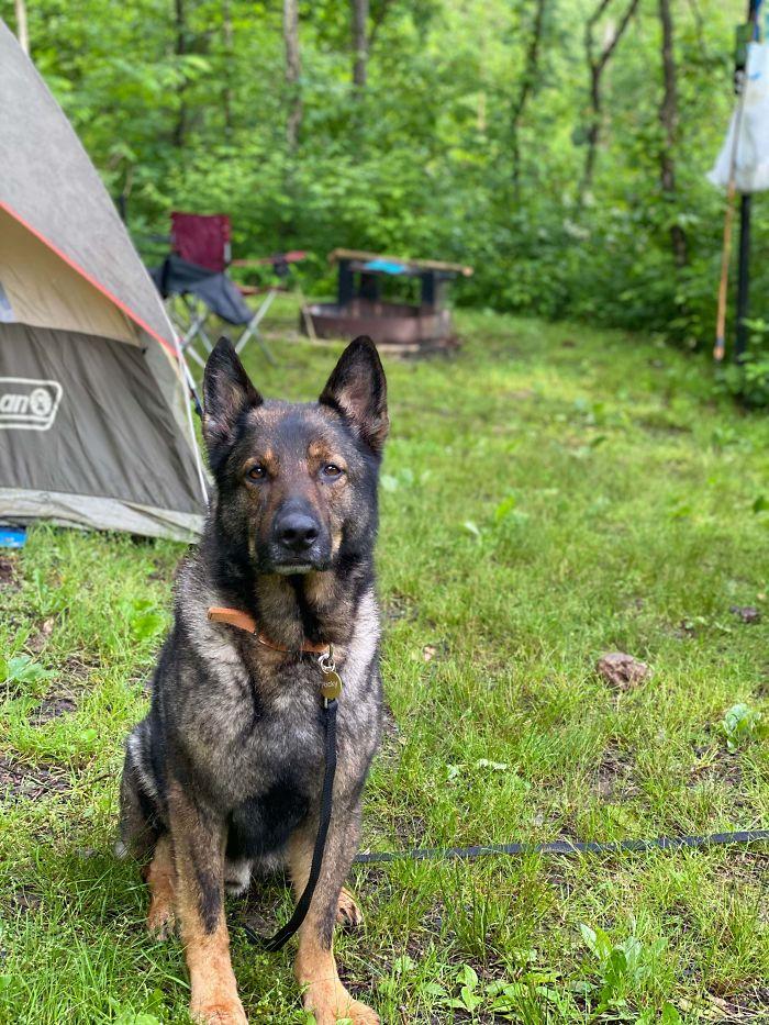 newly adopted dog camper buddy