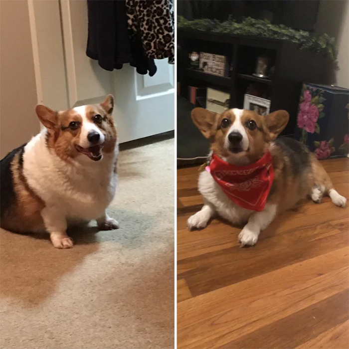 overweight dogs losing weight