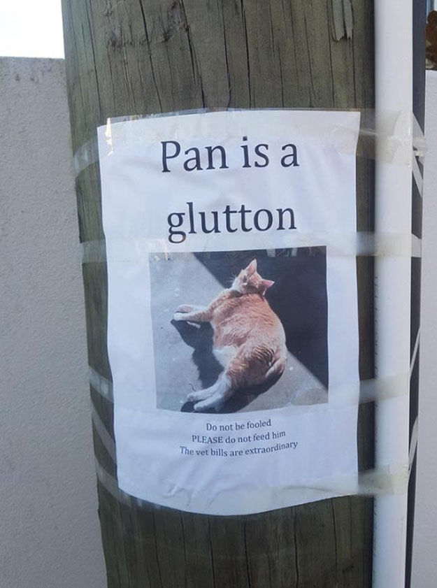 pan is a glutton