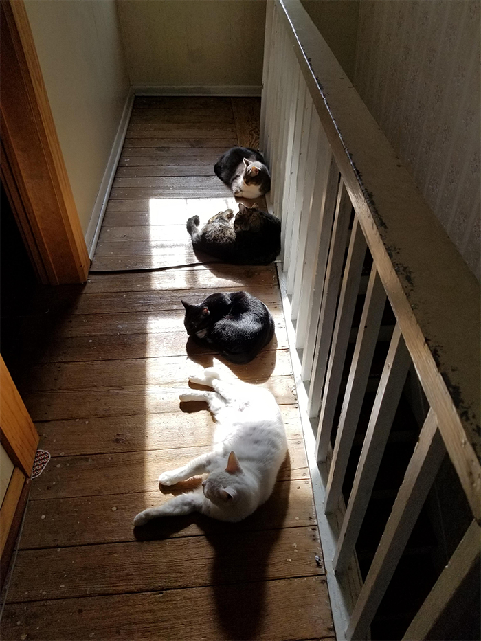pets sunbathing cats lined up